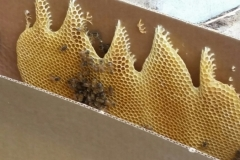 Beeswax in the nuc box