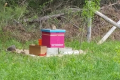 Our hive just set up